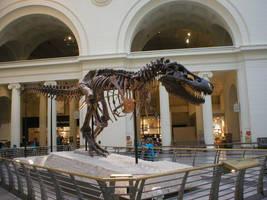 T-rex by Carnosaur
