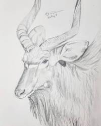Nyala by Safarisketch