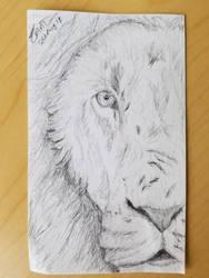 Lion on 3x5 card by Safarisketch