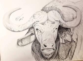 Cape Buffalo by Safarisketch