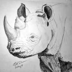 Rhinoceros  by Safarisketch