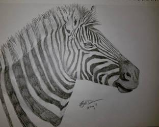 Zebra by Safarisketch