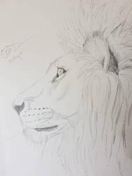 Lion by Safarisketch