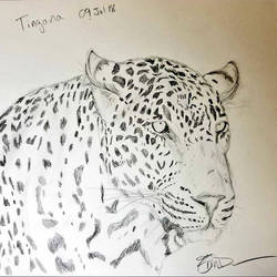 Tingana by Safarisketch