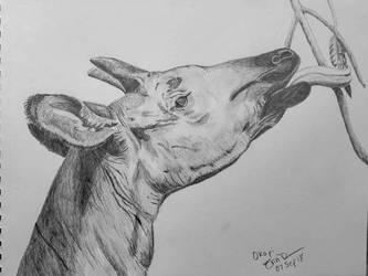 Okapi by Safarisketch