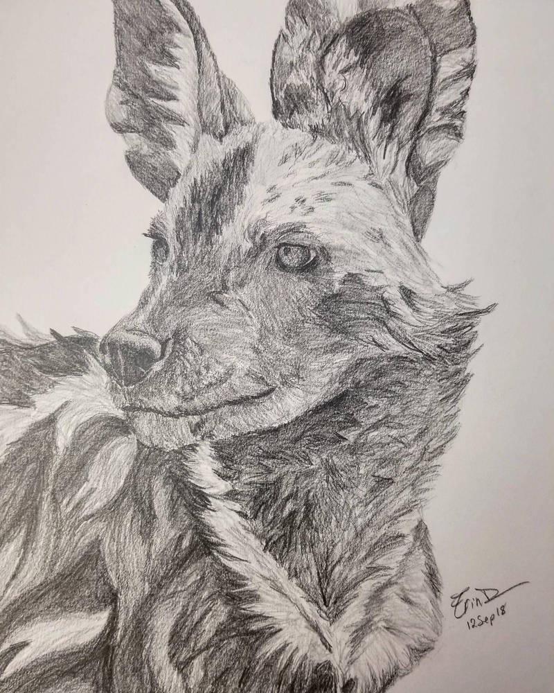 African Wild Dog by Safarisketch