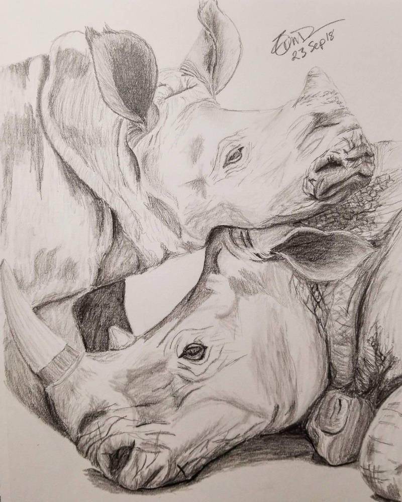 Rhino Cuddles by Safarisketch