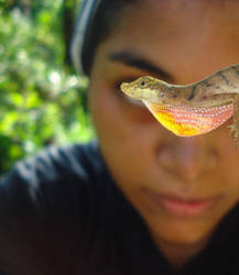 Anolis and me by Mallophora