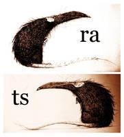 rats doodles by JBVendamme