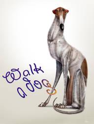 WALK A DOG by JBVendamme