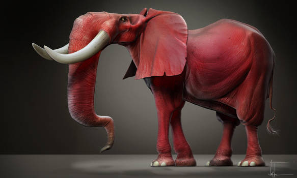 Red elephant by JBVendamme