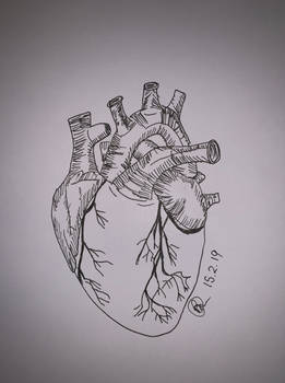 Human Heart by Brittanys-Creations