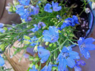 Blurple Flowers by wicam007