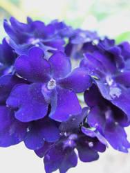 Purple Macro by wicam007