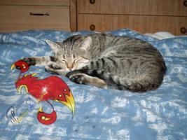 .:My Cat 2:. by PhoenixSAlover