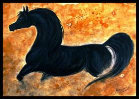 'Shetan, the Black Stallion' by LiberaEqua