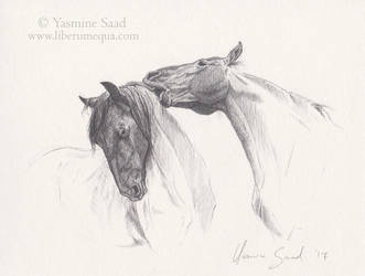 Sketch of two Friesians by LiberaEqua