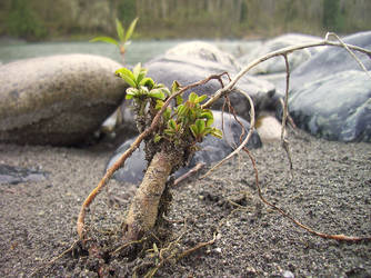 Little tree plant thing by WolfeStock