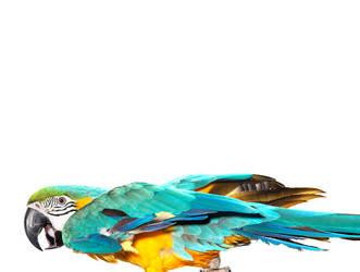Birds by kenglye