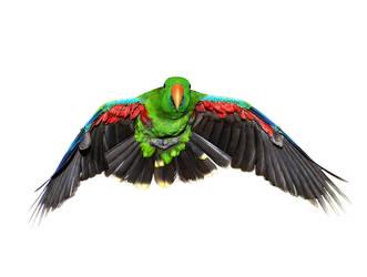Birds4 by kenglye
