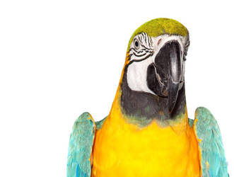 Birds9 by kenglye