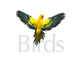 Birds10 by kenglye