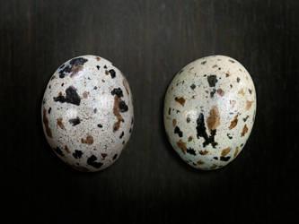 egg by kenglye