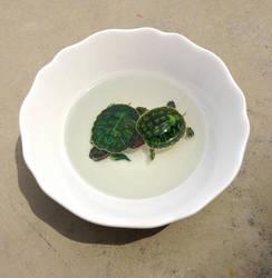 Turtles by kenglye