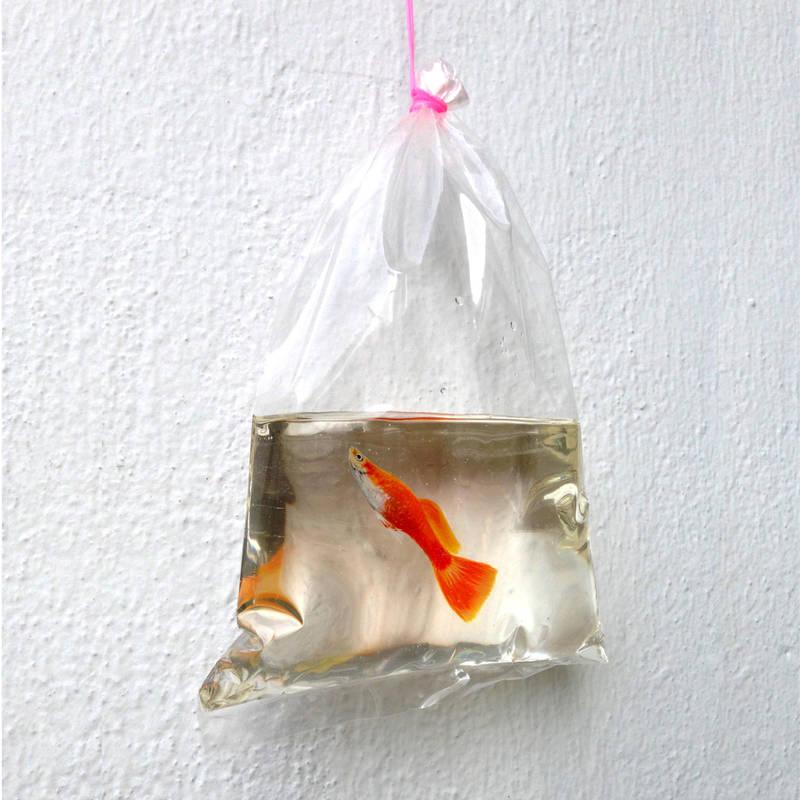 Takeaway fish by kenglye