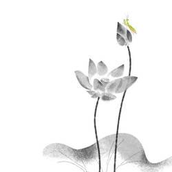 lotus 5 by kenglye