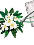 Floral fascination-Frangipani by kenglye