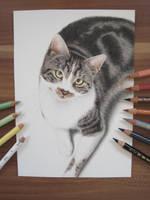 Cat (Dexter) by End-of-Horizon