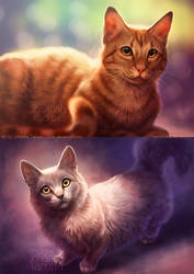 Cats cats cats by Lhuin