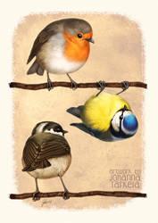 Three Little Birbs by Lhuin