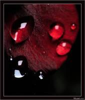 macro series pt. II by vibrakiller