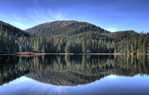 Spring Reflection by Muskeg