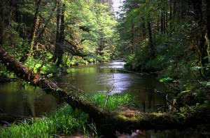 Ward Creek I by Muskeg