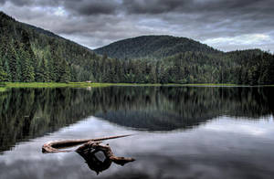 Ward Lake Afternoon by Muskeg