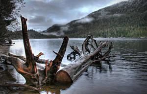 Along the Lake Shore by Muskeg