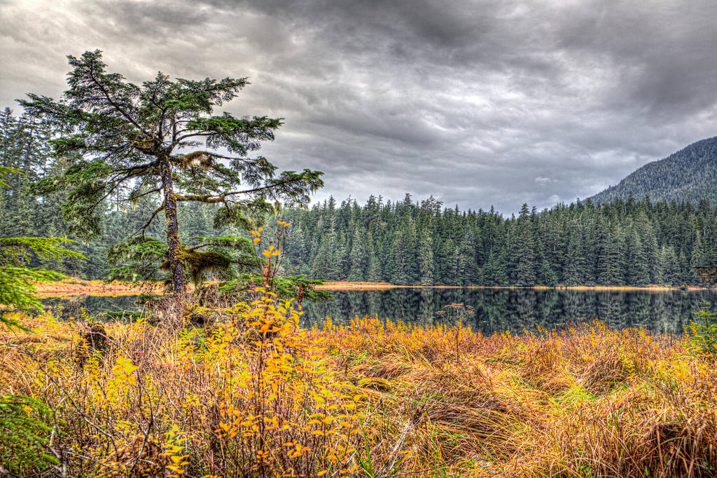 Fall Colors at Ward Lake by Muskeg