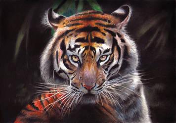Tiger by sergzosch