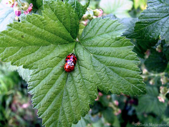 Sweet ladybugs 3:) by Zlajda95