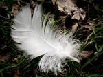 Feather by Zlajda95