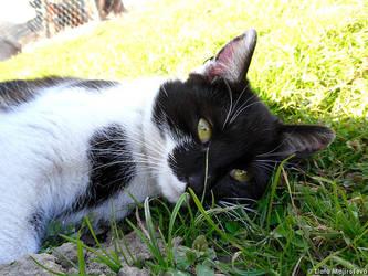 Cat Dreamer by Zlajda95