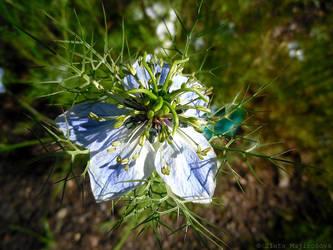 Unknow flora xD by Zlajda95