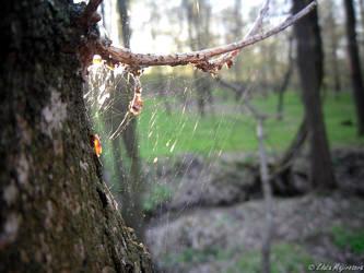Spider web by Zlajda95
