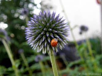 Ladybug on thistle by Zlajda95