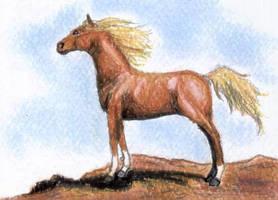 Chestnut Arabian 2 ACEO by calzephyr
