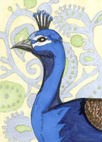 Paisley Peacock ACEO by calzephyr