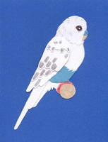 Budgie Card by calzephyr